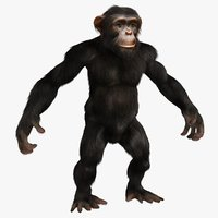 chimpanzee monkey fur 3D model