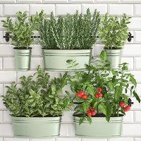 decorative plants kitchen railing 3D model