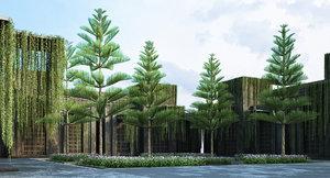 3D model norfolk island pine