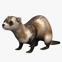 ferret animal mongoose 3D model