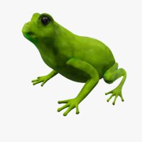 3D frog animations model