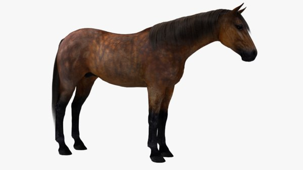 3D model horse modeled