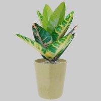 3D plant ornamental