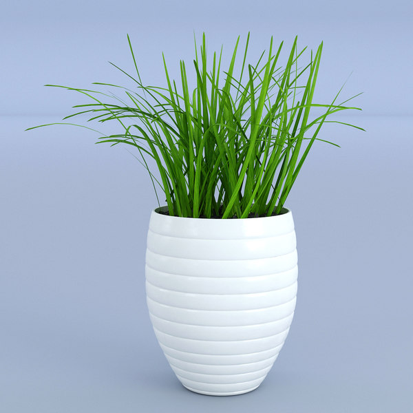 3D pot flower grass model