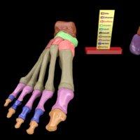3D foot labels colour