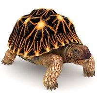 star tortoise 3D model