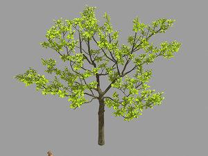 3D leaves - tree 32 model
