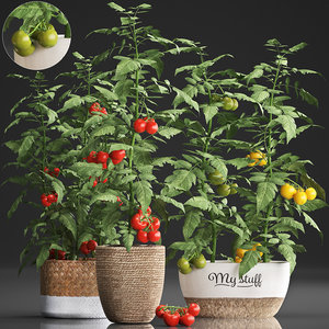 decorative plants kitchen tomato 3D