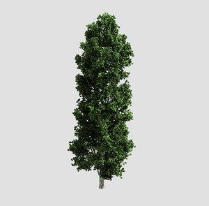 forest - poplar 23 3D