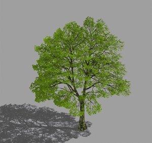 forest - eucalyptus 98 3D