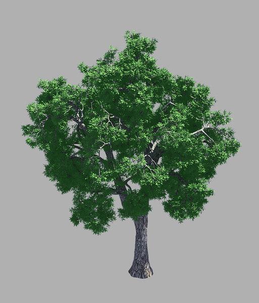 forest - ash tree 3D model