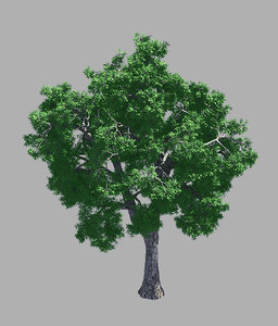 forest - ash tree 3D model