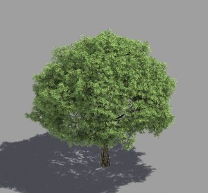 3D model forest - brittle willow