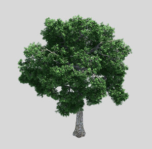 3D forest - ash tree model