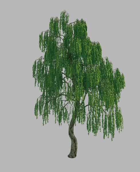 forest - birch tree 3D