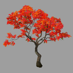 forest - red tree 3D