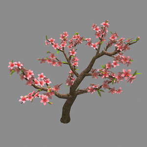 trees - peach 26 3D model