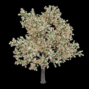 3D forest - pear tree