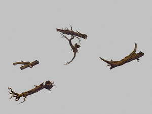 forest - deadwood 688 3D model