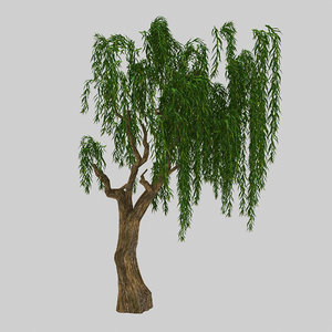 forest plant - willow 3D
