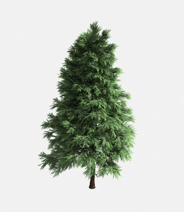 forest - scotia pine 3D model