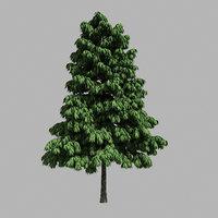 forest - medium eucalyptus 3D model