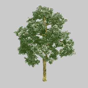 3D forest - wooden maple tree model