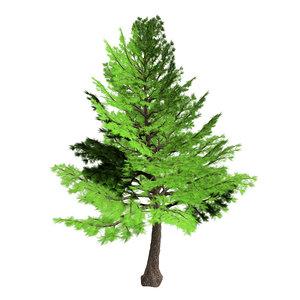 3D forest - cedars 21 model