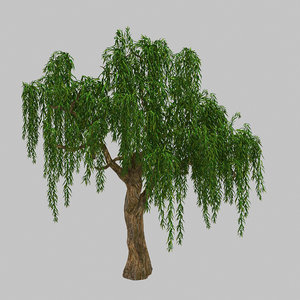 forest plant - willow tree 3D model
