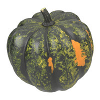 Highly Detailed Acorn Squash Scan 1