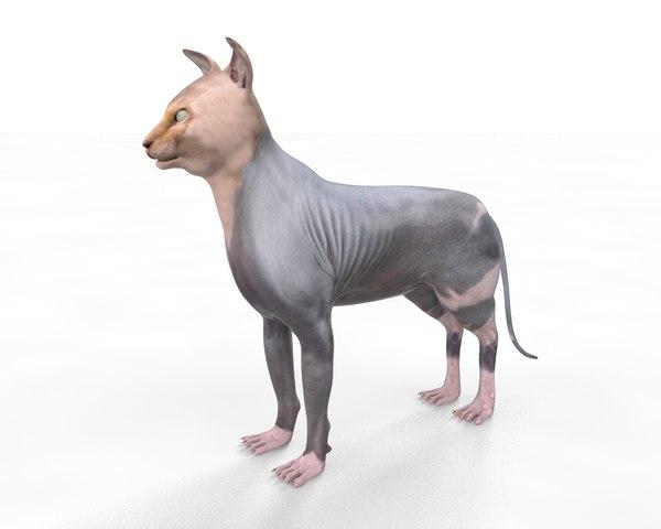 3D sphynx cat model