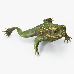 3D green frog pbr model