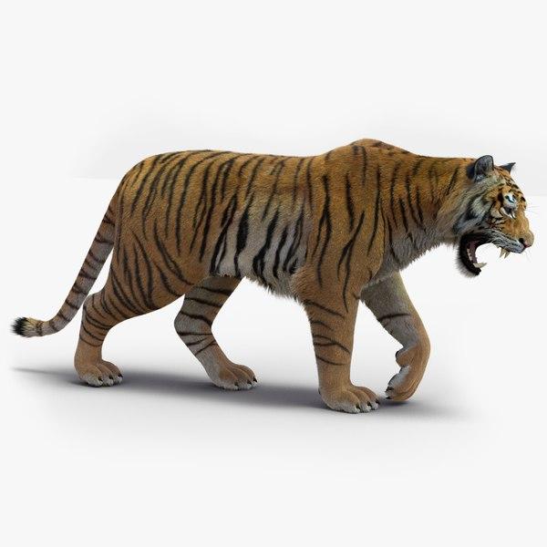 tiger 2 fur rigged 3D model