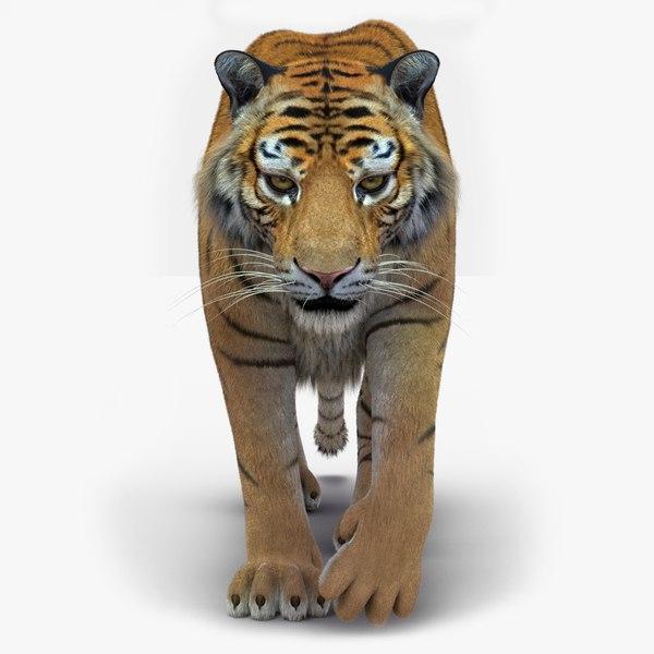 3D tiger 2 fur