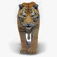 Tiger 2 (Fur)
