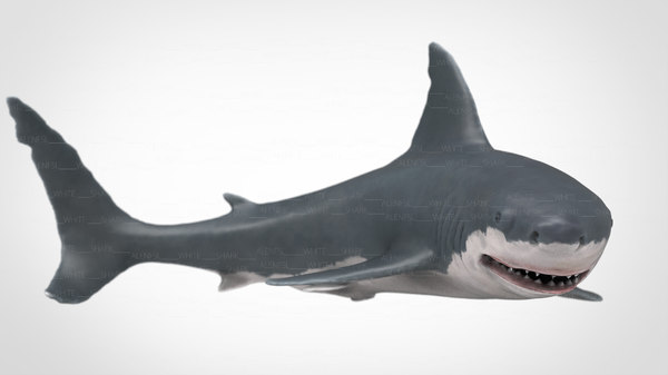 3D fish shark nature model