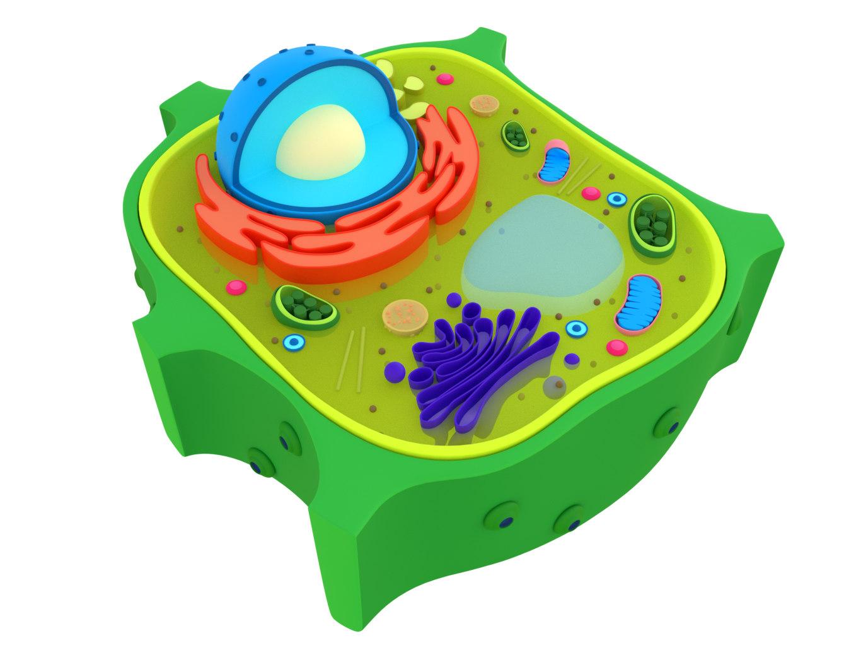植物细胞3D模型 - TurboSquid 1449619