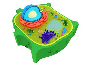 plant cells 3D model