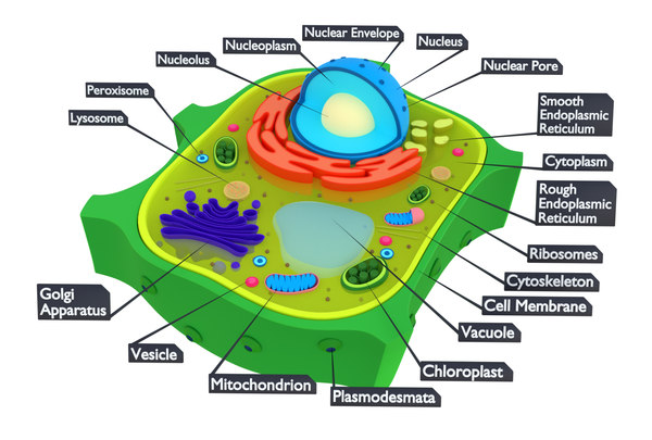Plant Cell FBX Models for Download | TurboSquid