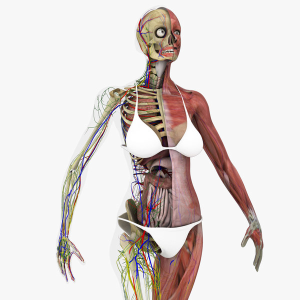 3D motion capture female anatomy