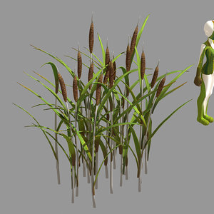 3D plant - dog tail