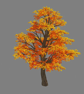 plant - birch tree 3D