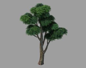 3D model plants - cypress 03