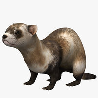 ferret animal mongoose 3D model