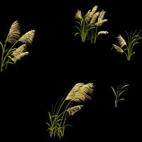 3D plant - reed 669