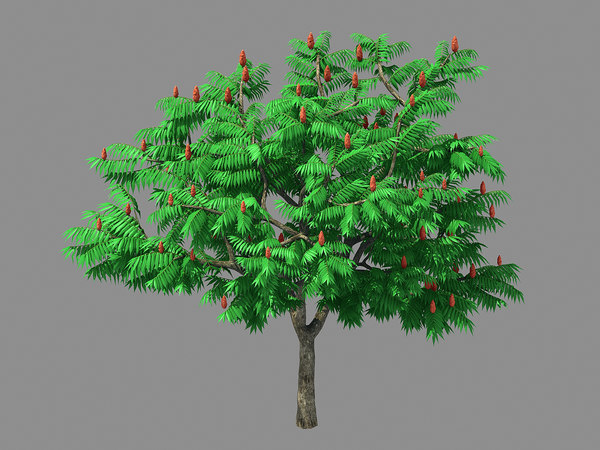 plant - torch tree 3D model