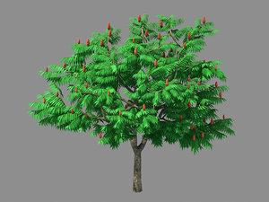 plant - torch tree 3D model