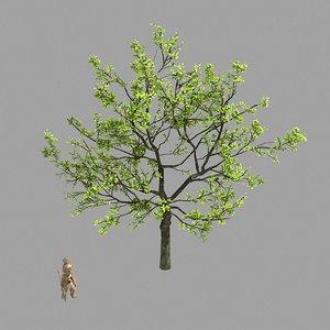 plant - green tree model