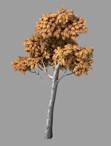 3D plants - arbor 36