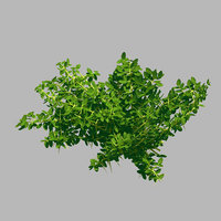 3D plant - weed 036